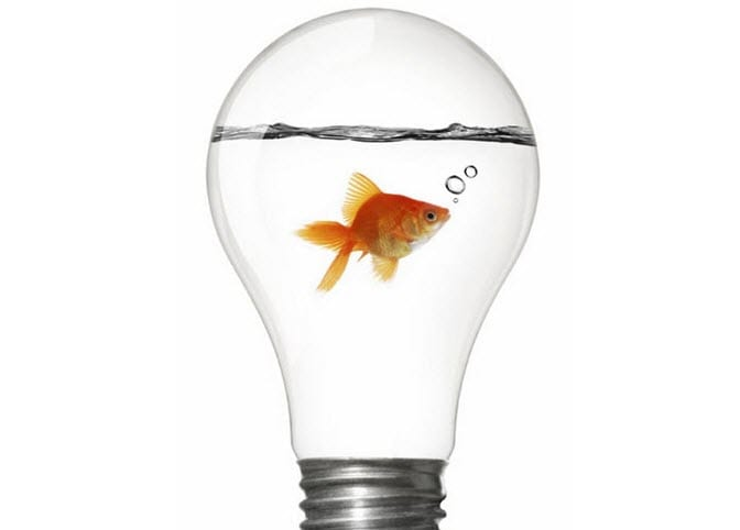 fish in a lightbulb
